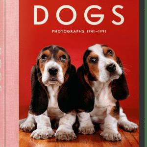 Dogs Photos
