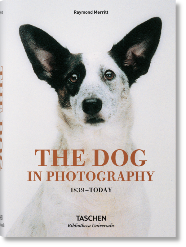 DOGS IN PHOTOGRAPHY